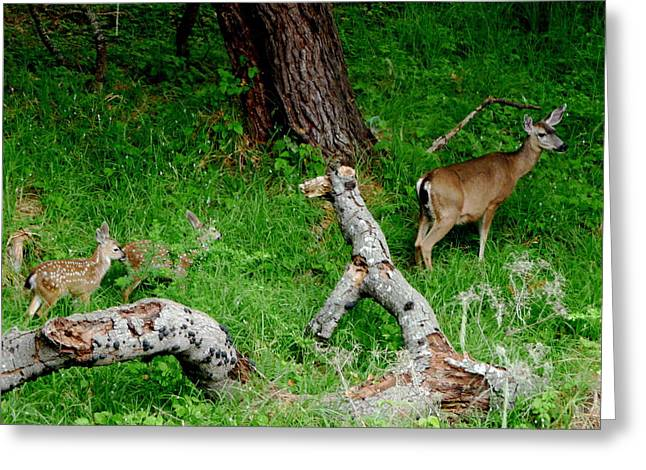 Family Pyrography Greeting Cards - Mother Deer Greeting Card by Aprelle Pierce