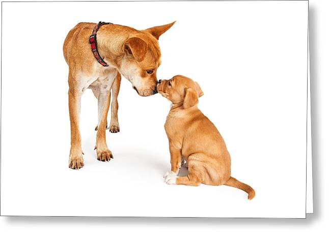 Mutt Greeting Cards - Mother Dog and Puppy Greeting Card by Susan  Schmitz