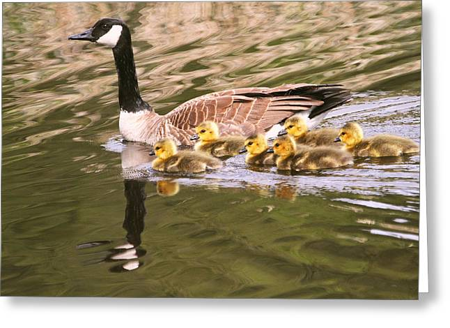 Mother Goose Greeting Cards - Mother Goose and Babies Greeting Card by Peggy Collins