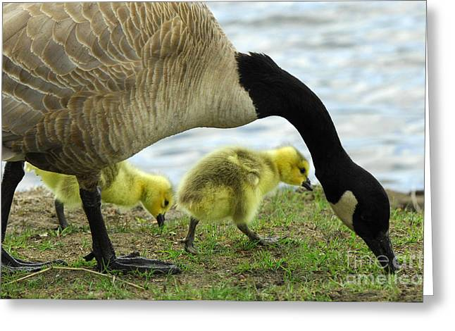 Mother Goose Greeting Cards - Mother Goose Greeting Card by Bob Christopher