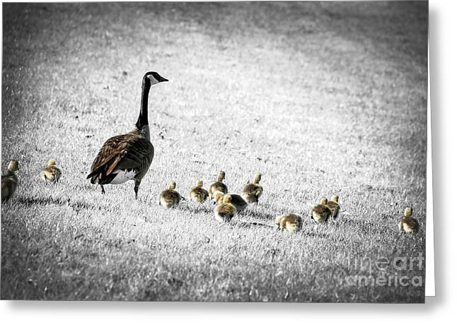Mother Goose Greeting Cards - Mother goose Greeting Card by Elena Elisseeva