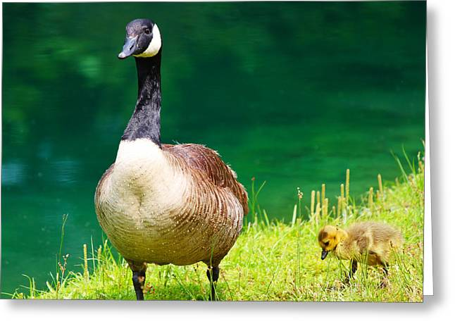 Mother Goose Greeting Card by Ella Char