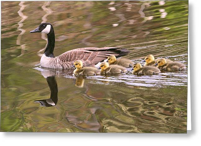 Mother Goose Greeting Cards - Mother Goose Greeting Card by Peggy Collins