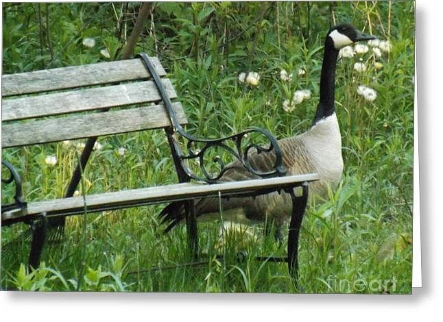 Mother Goose Greeting Cards - Mother Gooses Time Out Bench Greeting Card by Brenda Brown
