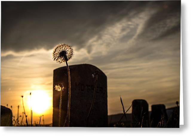 Jahred Allen Photography Greeting Cards - Mother.. Greeting Card by Jahred Allen