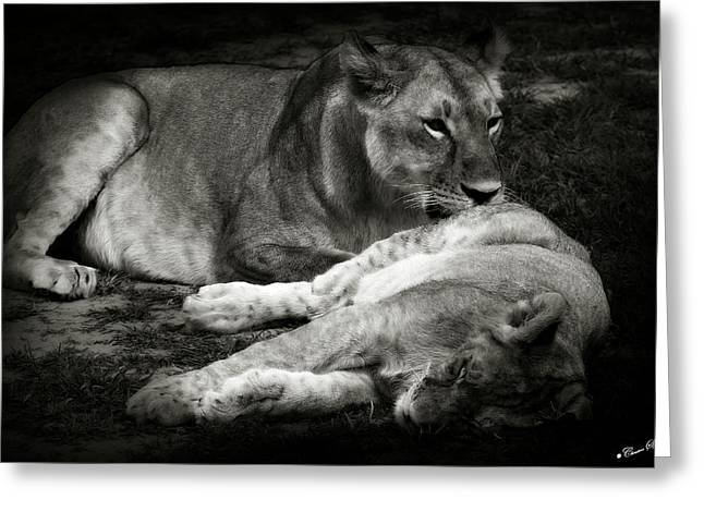 Lioness Greeting Cards - Mother Love Greeting Card by Christine Sponchia