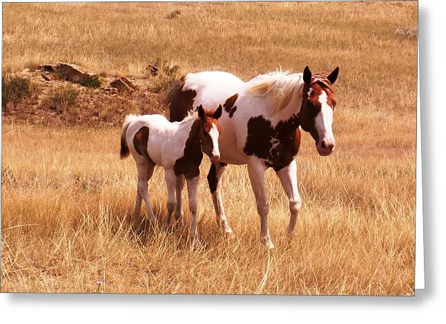 Horses Pyrography Greeting Cards - Mother love Greeting Card by Rebecca Wenger