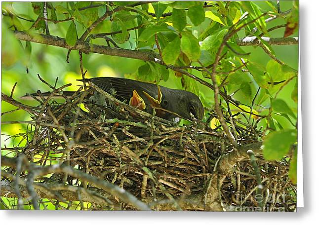 Baby Bird Greeting Cards - Mother Mockingbird Greeting Card by Al Powell Photography USA
