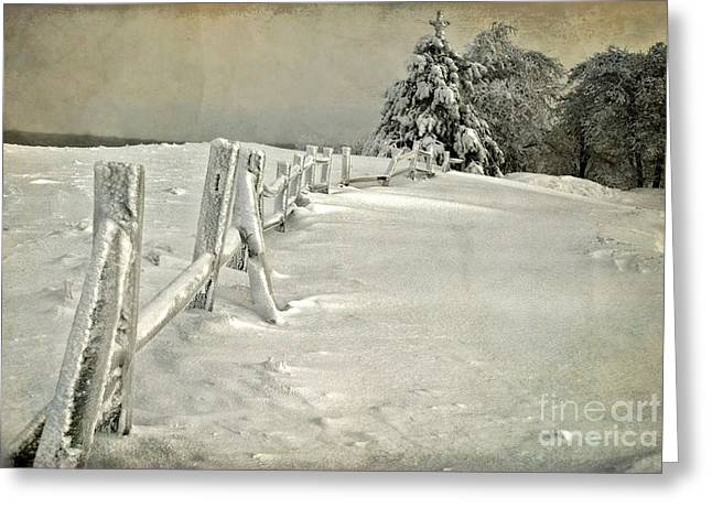 White Knob Mountains Greeting Cards - Mother Natures Christmas Tree Greeting Card by Lois Bryan
