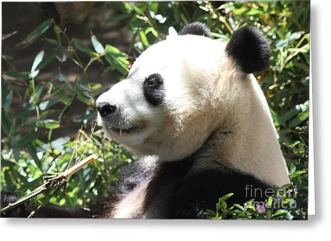 Art In Acrylic Greeting Cards - Mother Panda Greeting Card by John Telfer