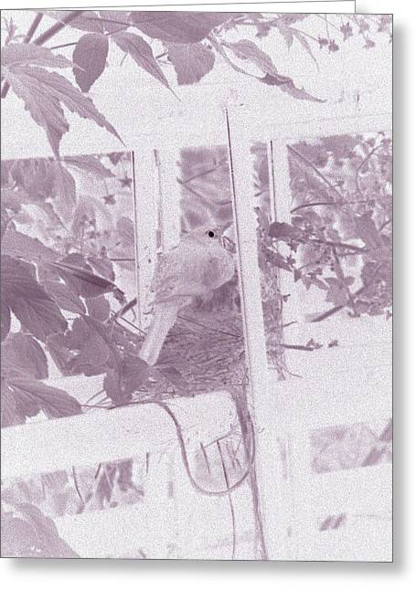 Reverse Art Greeting Cards - Mother Robin on Nest at Night - Negative Art Image  Greeting Card by James Scott Preston