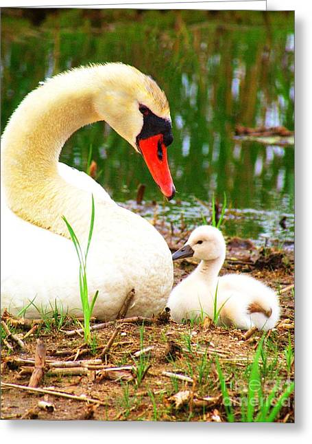 Fluffy Chicks Greeting Cards - Mother Swan and Baby Greeting Card by Nick Zelinsky