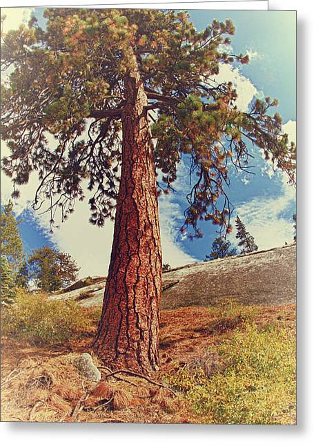 Turning Of The Leaves Greeting Cards - Mother Tree Greeting Card by Angela Stanton