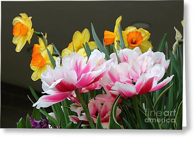 Mother Gift Greeting Cards - Mothers day collection 5 Greeting Card by Robert Pearson