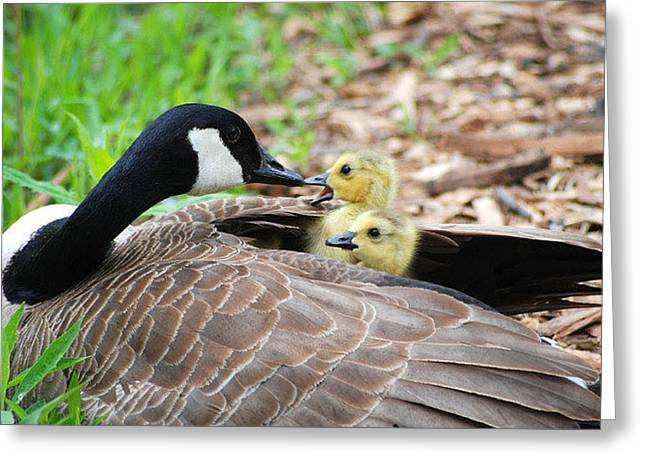 Mother Goose Greeting Cards - Mothers Day Greeting Card by Evan Butterfield