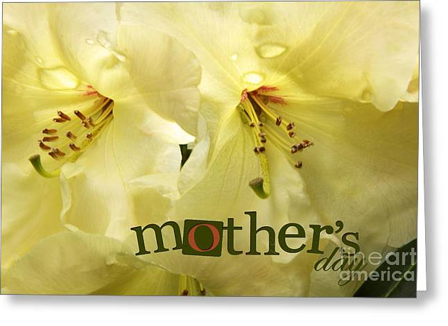 Mothers Day Greeting Card by Jean OKeeffe Macro Abundance Art