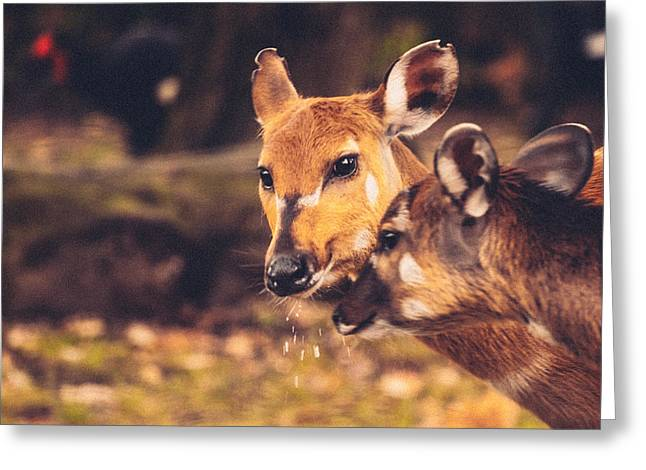 Caring Mother Greeting Cards - Mothers love deer and cute fawn Greeting Card by Modern Art Prints