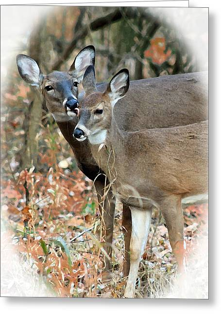 Most Viewed Digital Greeting Cards - Mothers Love Greeting Card by Lorna Rogers Photography