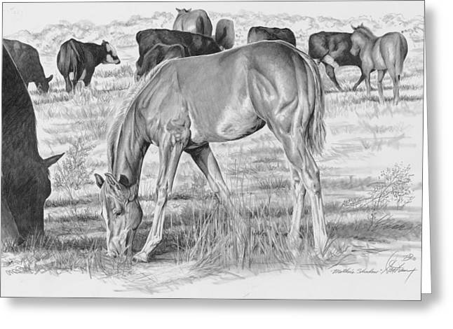 Livestock Drawings Greeting Cards - Mothers Shadow Greeting Card by Don Dane