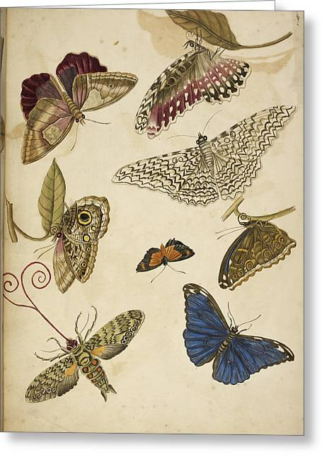 Moths And Butterfiles Greeting Card by British Library