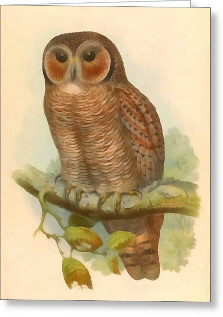 John Gould Greeting Cards - Mottled Wood Owl Greeting Card by John Gould