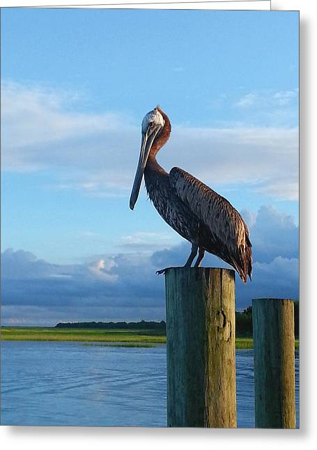 Saltlife Greeting Cards - Motts Seafood Pelican Greeting Card by Karen Rhodes