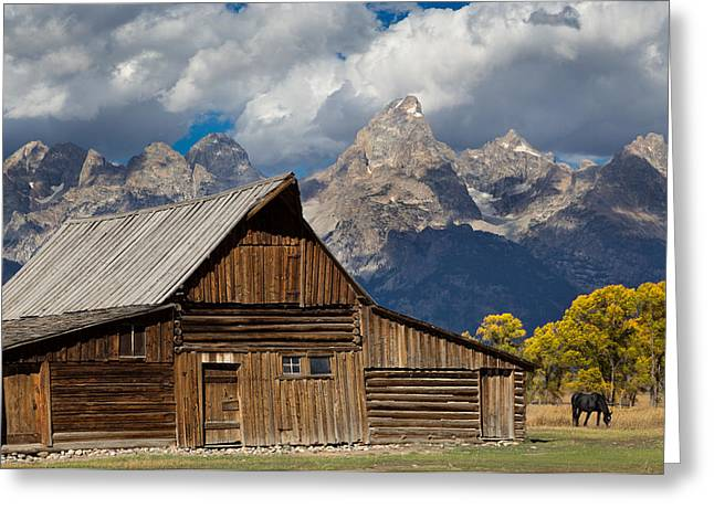 Grazing Snow Greeting Cards - Moulton Barn on Mormon Row Greeting Card by Kathleen Bishop