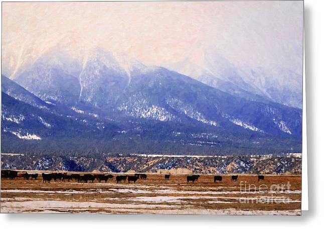 Grazing Snow Greeting Cards - Mount Antero Cows in Paint Greeting Card by Janice Rae Pariza
