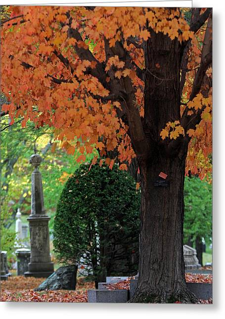 Auburn Ma Greeting Cards - Mount Auburn Cemetery - Cambridge - Massachusetts Greeting Card by Juergen Roth