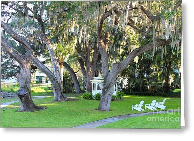 Willow Lake Greeting Cards - Mount Dora Greeting Card by Carey Chen