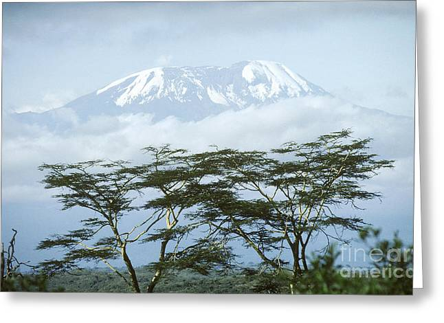 Geography Greeting Cards - Mount Kilimanjaro, Tanzania Greeting Card by Gregory G. Dimijian, M.D.