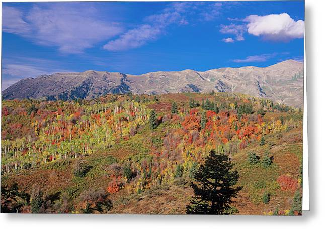 Mount Nebo Fall, Mount Nebo Scenic Greeting Card by Howie Garber