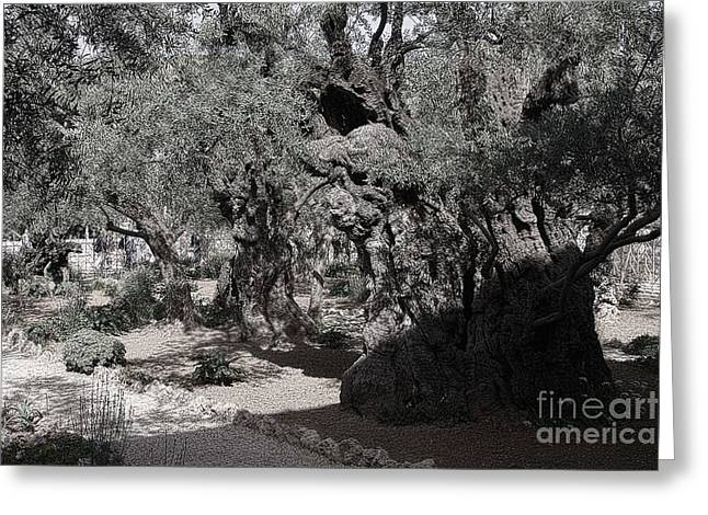 Jesus Sermon Greeting Cards - Mount of Olives Greeting Card by Tom Griffithe