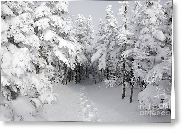 Best Sellers -  - Snow-covered Landscape Greeting Cards - Mount Osceola Trail - White Mountains New Hampshire Greeting Card by Erin Paul Donovan