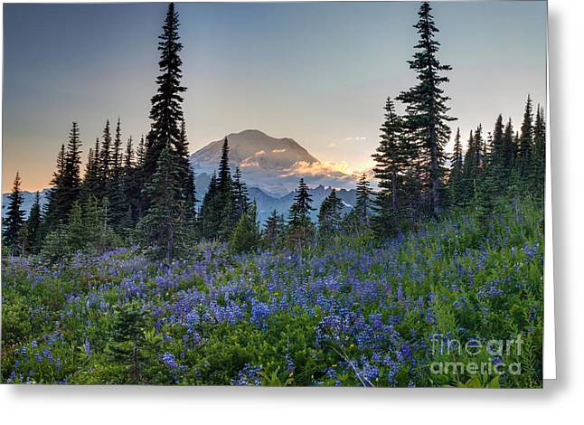 Mount Rainer Flower Fields Greeting Card by Mike Reid