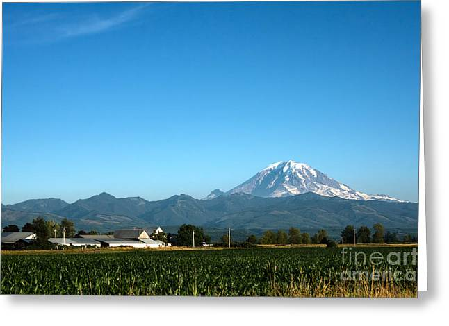 Cornfield Greeting Cards - Mount Rainier and Cornfield Greeting Card by Stacey Lynn Payne