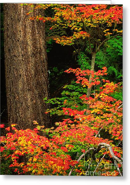 Colorful Bark Greeting Cards - Mount Rainier Fall Foliage Greeting Card by Inge Johnsson