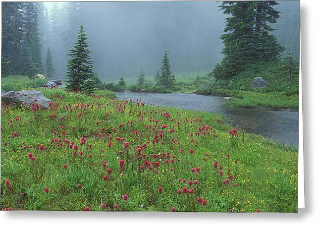 Northwestern Indian Greeting Cards - Mount Rainier Meadow Greeting Card by Greg Vaughn
