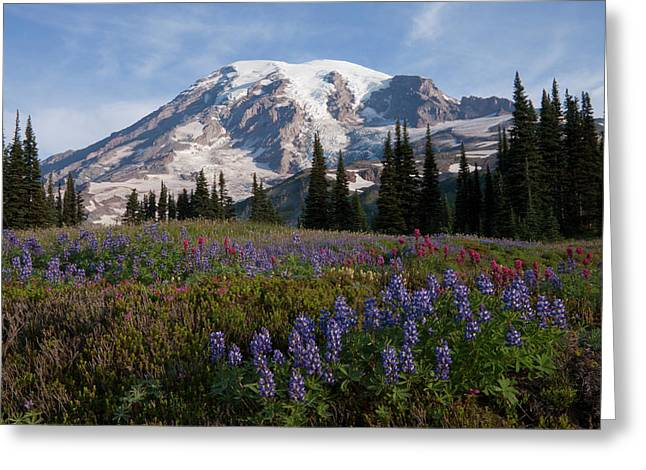 Mount Rainier National Park, Mount Greeting Card by Ken Archer