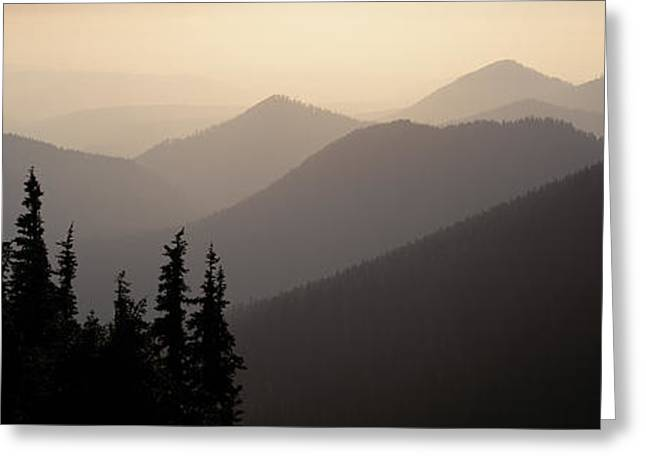 Misty Pine Photography Greeting Cards - Mount Rainier National Park Wa Usa Greeting Card by Panoramic Images