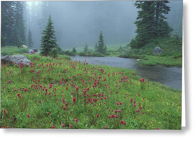 Northwestern Indian Greeting Cards - Mount Rainier Paintbrush and Pond Greeting Card by Greg Vaughn