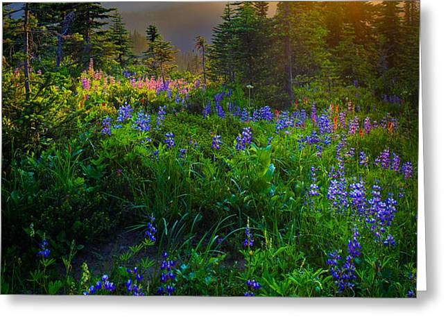 Mount Rainier Sunburst Greeting Card by Inge Johnsson