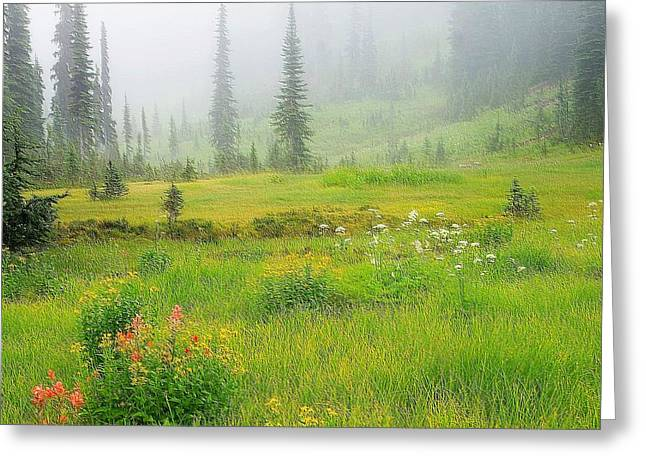 Bird Summit Greeting Cards - Mount Revelstoke National Park British Columbia Canada Greeting Card by Maciej Froncisz