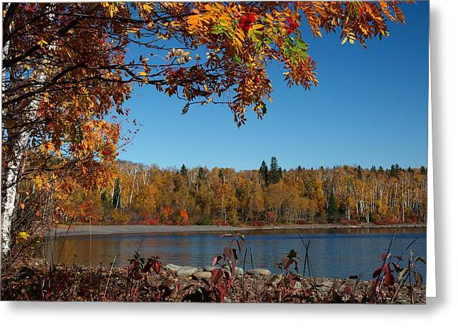 Peterson Nature Photography Greeting Cards - Mountain Ash in Autumn Greeting Card by James Peterson