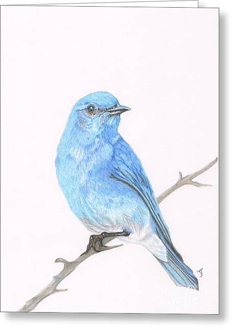Sized Drawings Greeting Cards - Mountain Bluebird Greeting Card by Yvonne Johnstone