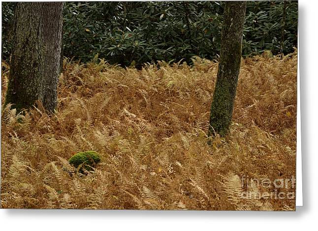 High Virginia Images Greeting Cards - Mountain Carpet Greeting Card by Randy Bodkins