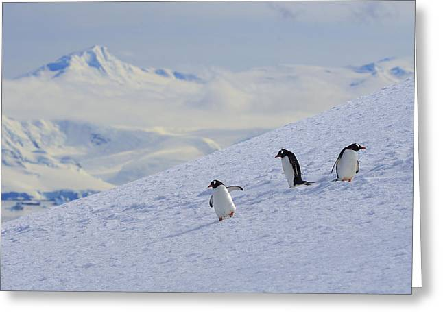 Snow Scene Landscape Greeting Cards - Mountain Climbers Greeting Card by Tony Beck