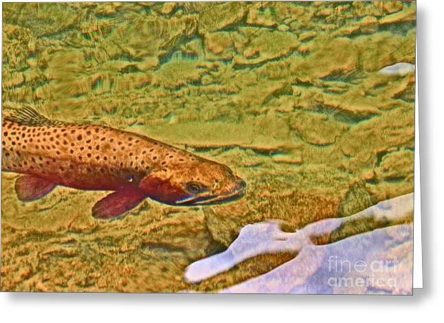 Rainbow Trout Greeting Cards - Mountain Fish Greeting Card by Tonya Hance