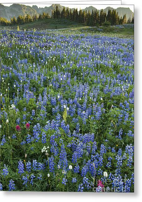 Mazama Greeting Cards - Mountain Flower Meadow Greeting Card by John Shaw