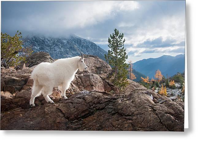 Brian Bonham Greeting Cards - Mountain Goat Greeting Card by Brian Bonham